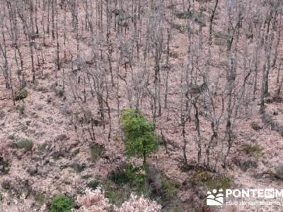 El Valle del Ambroz y la Judería de Hervás - Hervás PR-CC 36 La Chorrera;caminatas por madrid